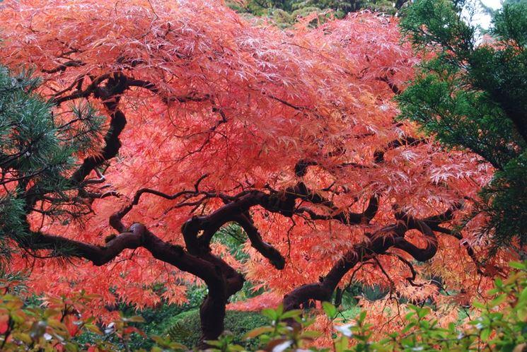 Presque toutes les œuvres d'Akira Toriyama – Semaine du 1er au 7 octobre - jumta